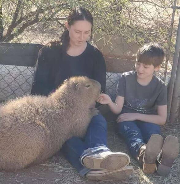 Are Capybaras Good Pets